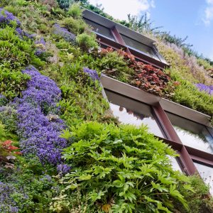16 10 green walls