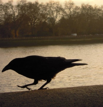 What We Can Learn About Innovation From Crows